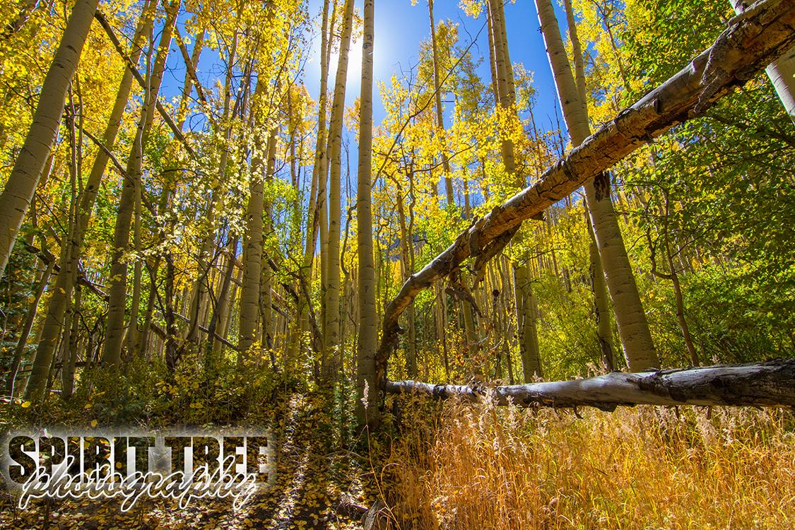 Autumn on Owl Creek