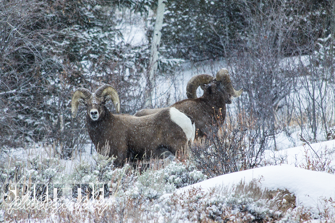 Snowy Morning in the Poudre