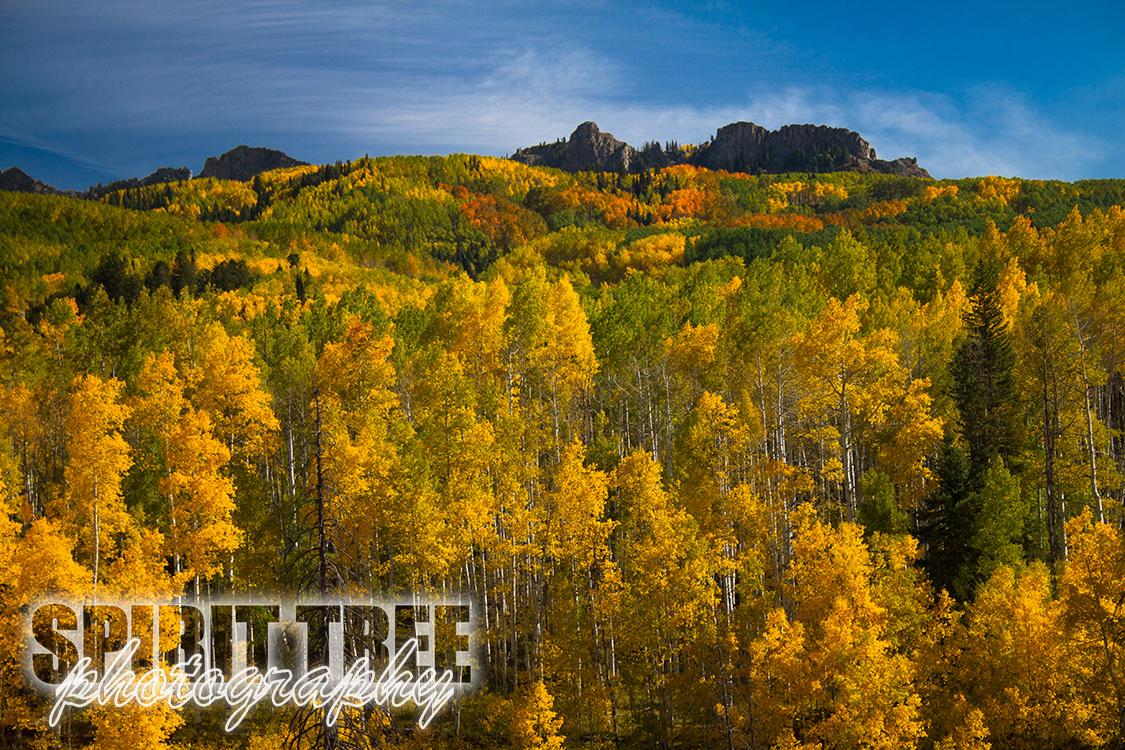 Peak Aspen Colors of Colorado